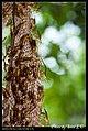 Hymenoptera (6022582378).jpg