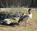 ITALY - Parco Natura Viva - Verona-.JPG