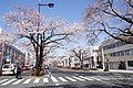 Ibaraki Prefectural Route-293 07.jpg