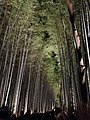 Illuminated Sagano bamboo forest 3.jpg
