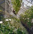 Interieur oranjerie met de tuinman aan het werk - Voorschoten - 20406309 - RCE.jpg
