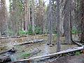 Iron Creek (15185221625).jpg