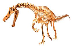 Irritator challengeri mount 01 white background.jpg
