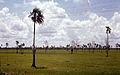 Isla de Pinos Cuba 1972 PD 2.jpg