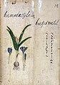 Japanese Herbal, 17th century Wellcome L0030081.jpg