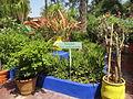 Jardin Majorelle 034.JPG
