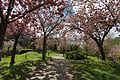Jardin japonais - Toulouse - 2012-04-10 - 3.jpg