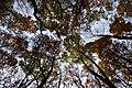Jesień w górze.jpg