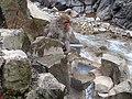 Jigokudani YaenKouen (Monky park) , 地獄谷 野猿公苑 - panoramio (22).jpg