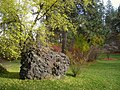 John A. Finch Arboretum - IMG 6900.JPG