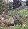 Jonathan Company Battle Site IMG 1172.jpg