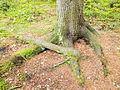 Jyväskylä - tree root 3.jpg