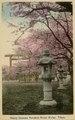 KITLV - 1405777 - Cherry blossoms Yasukuni Shrine Kudan, Tokyo. - 1900-1925.tif