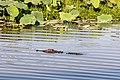 Kakadu (AU), Kakadu National Park, Yellow Water -- 2019 -- 3896.jpg