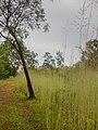 Kakadu National Park-2 (8308699853).jpg