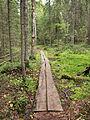 Kangasvuori nature trail - duckboards 3.jpg