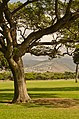 Kapiolani Park, Waikiki, Oahu, Hawaii - panoramio (2).jpg