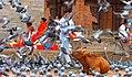 Kathmandu, Nepal (4130999621).jpg