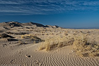 Kelso Dunes sand field in the Mojave Desert