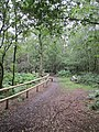 Kennel Wood - panoramio.jpg