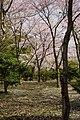 Kenrokuen (2443665175).jpg