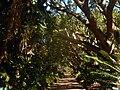 Kirstenbosch National Botanical Garden by ArmAg (4).jpg