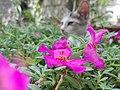 Kitten on a flower bed.jpg
