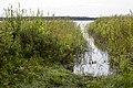 Klāņu ezers - panoramio.jpg