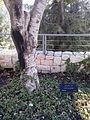 Kolasinski tree.jpg