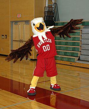 Kwantlen Polytechnic University - Kwinten is the mascot for the Kwantlen Eagles athletics program