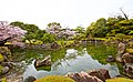 Kyoto, 桜, sakura, Nijo-Castle - panoramio (1).jpg
