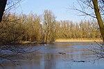 LSG H 00070 Calenberger Leinetal - Teich an der Calenburg (8).jpg