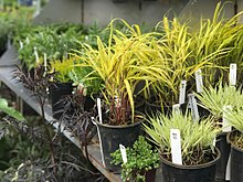 Plants for sale at the Lake Washington Institute of Technology Annual Plant Sale