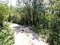 La strada per i sentieri del parco sopra bovezzo - panoramio.jpg