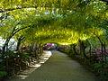 Laburnum Arch, Bodnant Garden.JPG