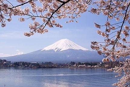 河口湖のソメイヨシノと富士山