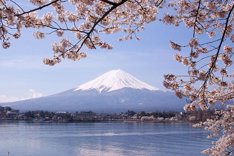 800px-Lake_Kawaguchiko_Sakura_Mount_Fuji