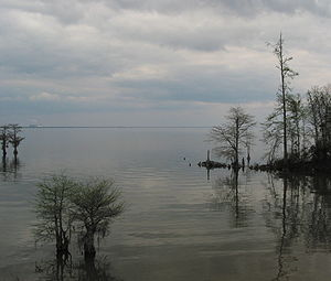Lake Moultrie - A picture of Lake Moultrie from the southwest shore.