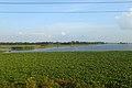 Landscape of Raipura Upazila (02).jpg