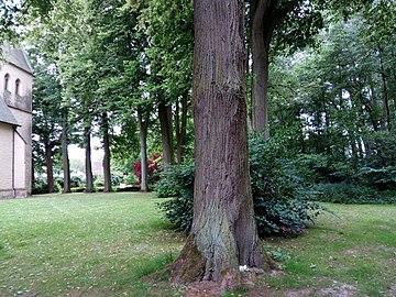 Landschaftsschutzgebiet Warmenau-Ufer LSG OS 00019 Datei 31.jpg