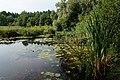 Lanzendorfer Moor 01.jpg