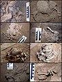Lapa do Santo - Sepultamento 15 - Montagem de fotos de campo.jpg