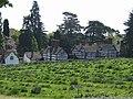 Lavender Field - geograph.org.uk - 420886.jpg