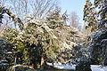 Le Havre,janvier 2009, neige sur le parc Hauser.JPG