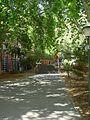 Leafy walk road.jpg