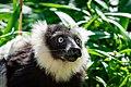 Lemur (36710145481).jpg