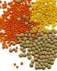 Nasiona żółtej soczewicy (Lens culinaris)