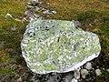 Lichen on rocks Lille Malene hike near Nuuk Greenland.jpg