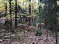 Lienewitzer Forst - Rabattenpflanzung 26-10-2006 0149.jpg