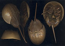 5. Horseshoe crabs (450 million years)